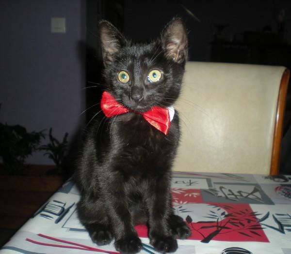 Réglisse - chats noirs