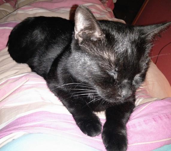 Rubis chat noir 1212