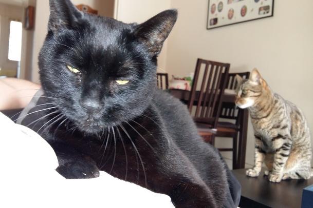 Salem 861