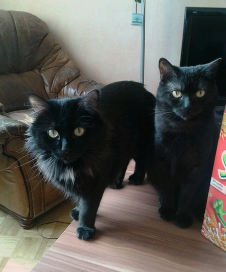 Tamara et Salem 432e membres Club Chats Noirs