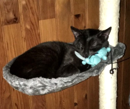Simba chat noir 1229
