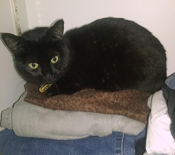 Stitch chat noir 1223