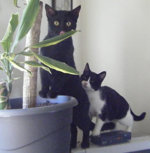 Sueño chat noir 1254