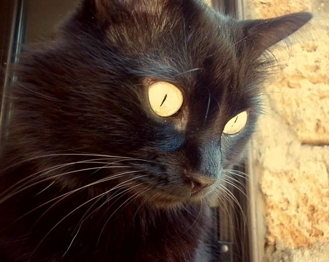 Tibet 653 chats noirs
