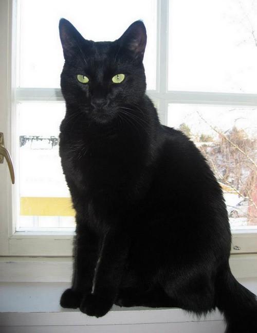 Tino, 408e membre du Club Chats Noirs