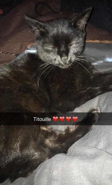 Titouille chat noir 1207
