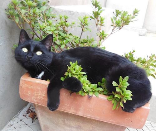 Tity chat noir 1240