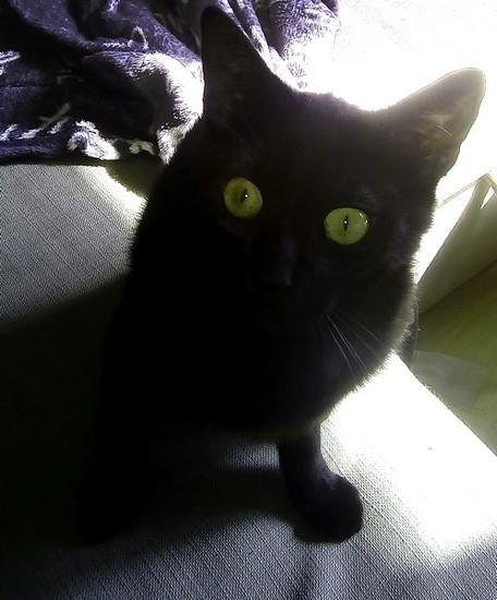 Tyka chat noir 1237