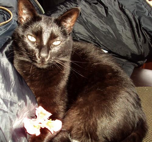 Youyou 555e membre club chats noirs