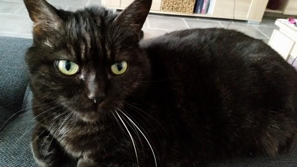Wallys chat noir 1261