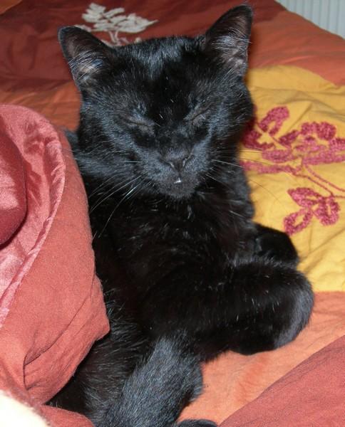 Yaou chat noir 1204
