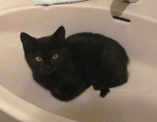Ydole, 366e membre du club chats noirs