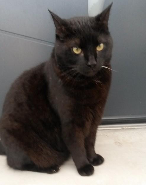 Zamba 637e membre club chats noirs