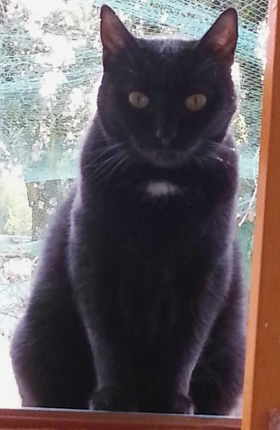Zoé 536e membre club chats noirs