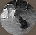 Richelieu et ses chats - Lucifer chat noir