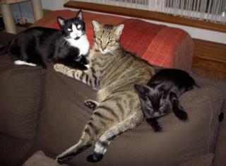Habanita, Mitsouko & Shalimar