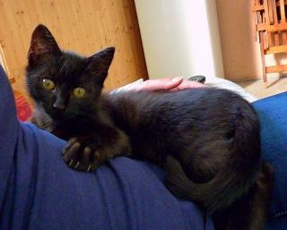 Malau 527e membre du club chats noirs