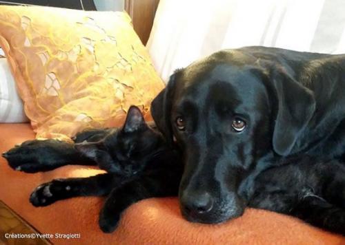 Bijou 550e membre club chats noirs